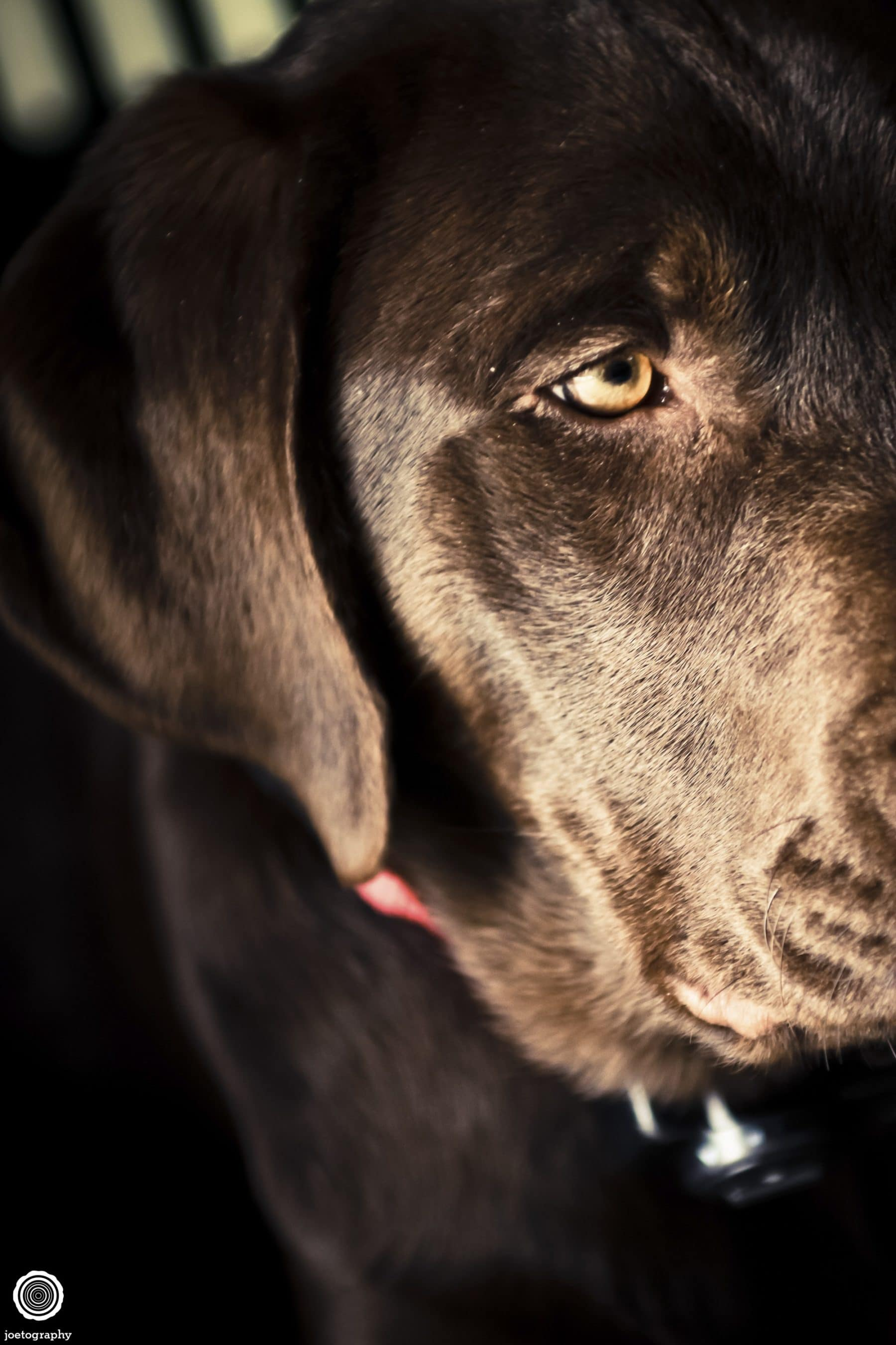 Pet-Photography-Tennessee-3