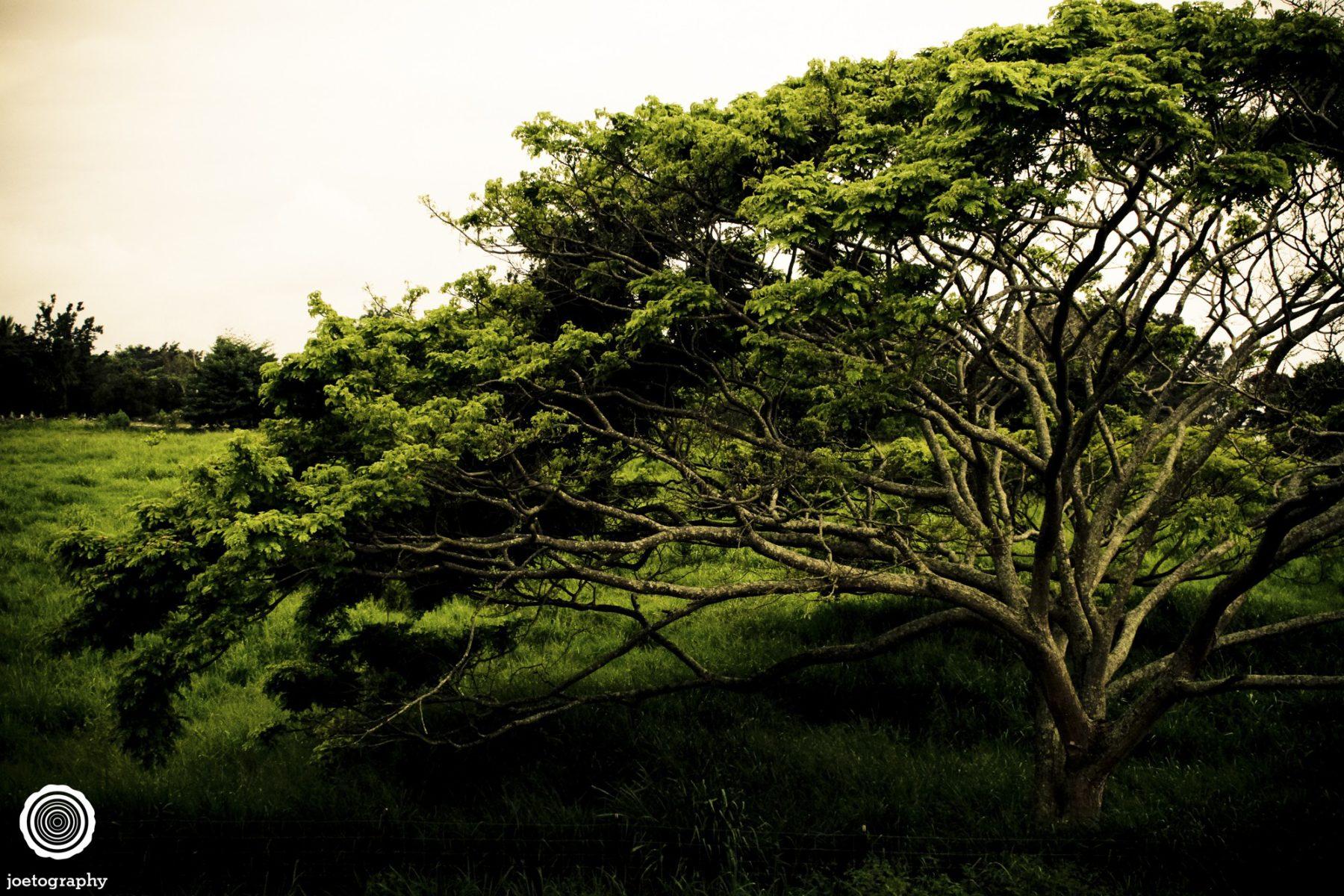Hawaii-Big-Island-Travel-Photography-2011-4