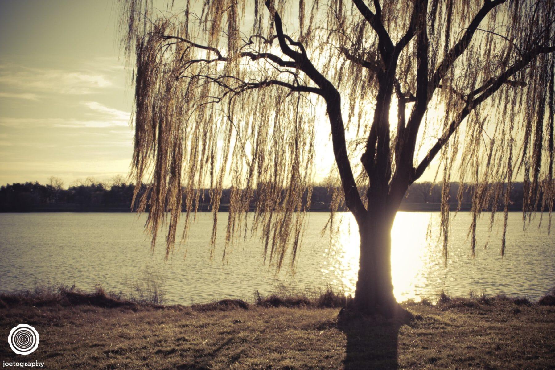 weeping-willow-nature-photography-washington-dc-2