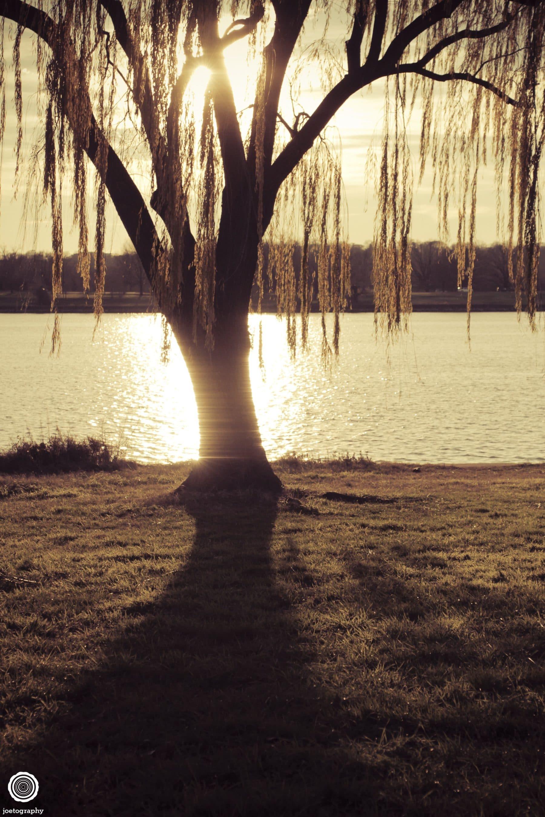 weeping-willow-nature-photography-washington-dc-3
