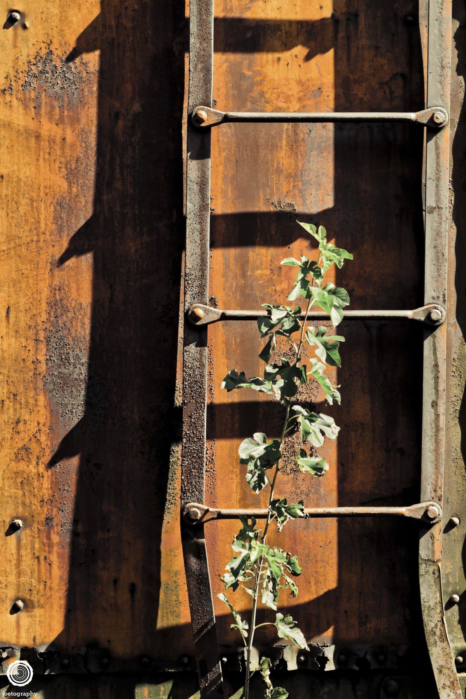 Abandoned-Train-Photography-Carthage-Indiana-15