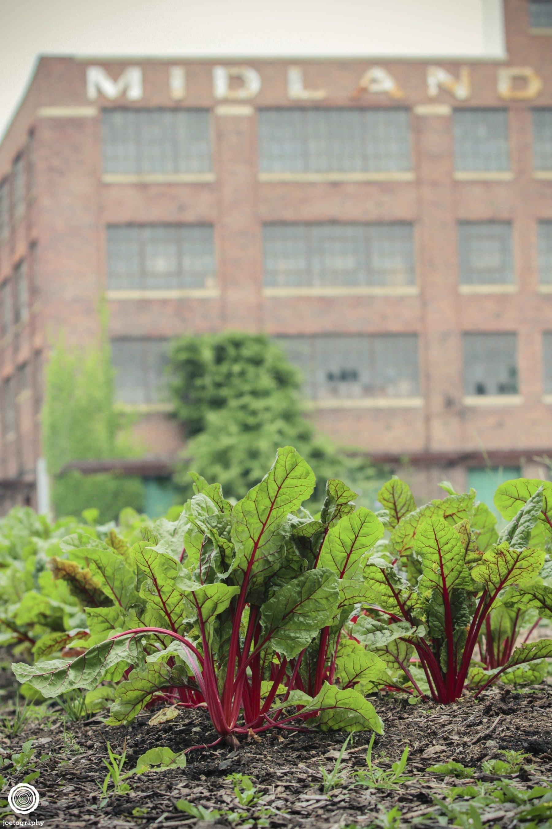 Big-City-Farms-Indianapolis-41