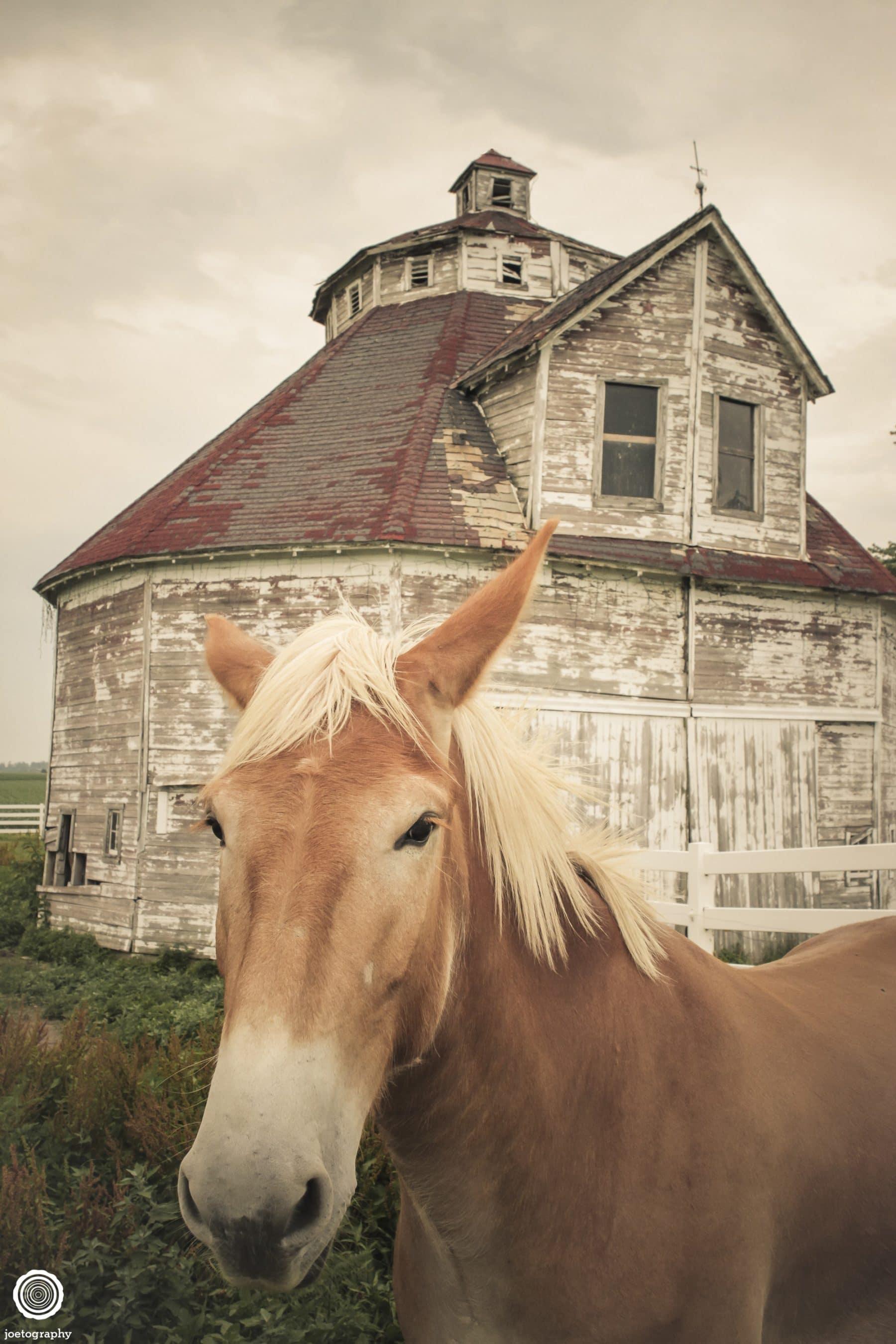 polygonal-barn-architecture-photos-shelbyville-indiana-4