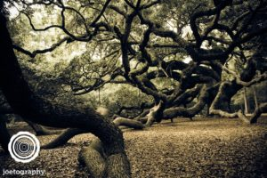 Angel_Oak