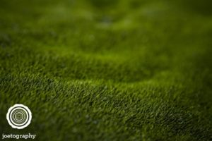 Natures_Carpeting