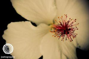 Pin_Cushion
