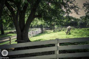 joetography-travel-photography-bourbon-country-kentucky-2014-4