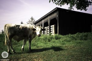 joetography-travel-photography-bourbon-country-kentucky-2014-5