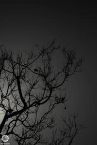 joetography-travel-photography-san-diego-california-2014-12