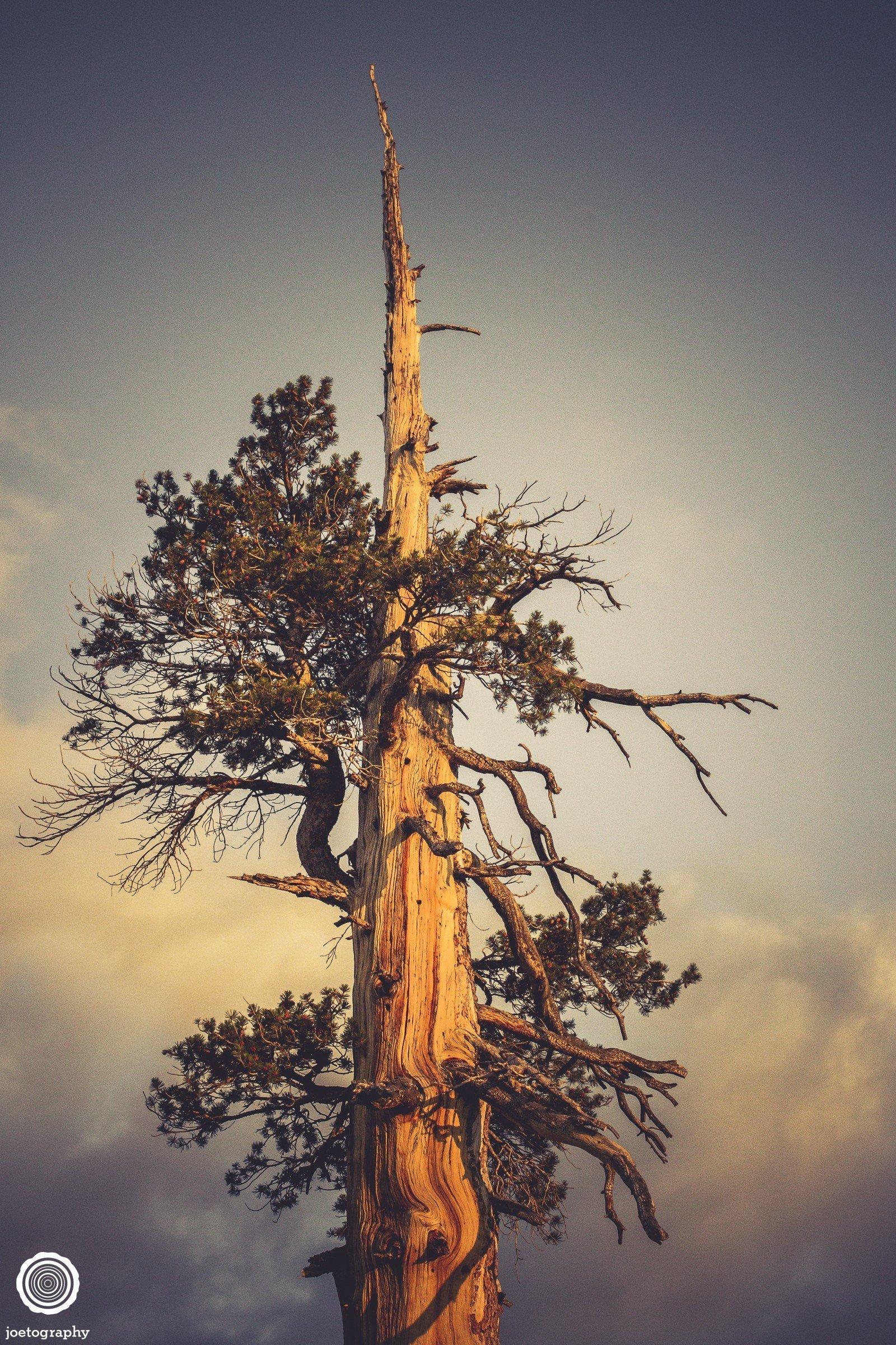 joetography-travel-photography-yosemite-2015-5