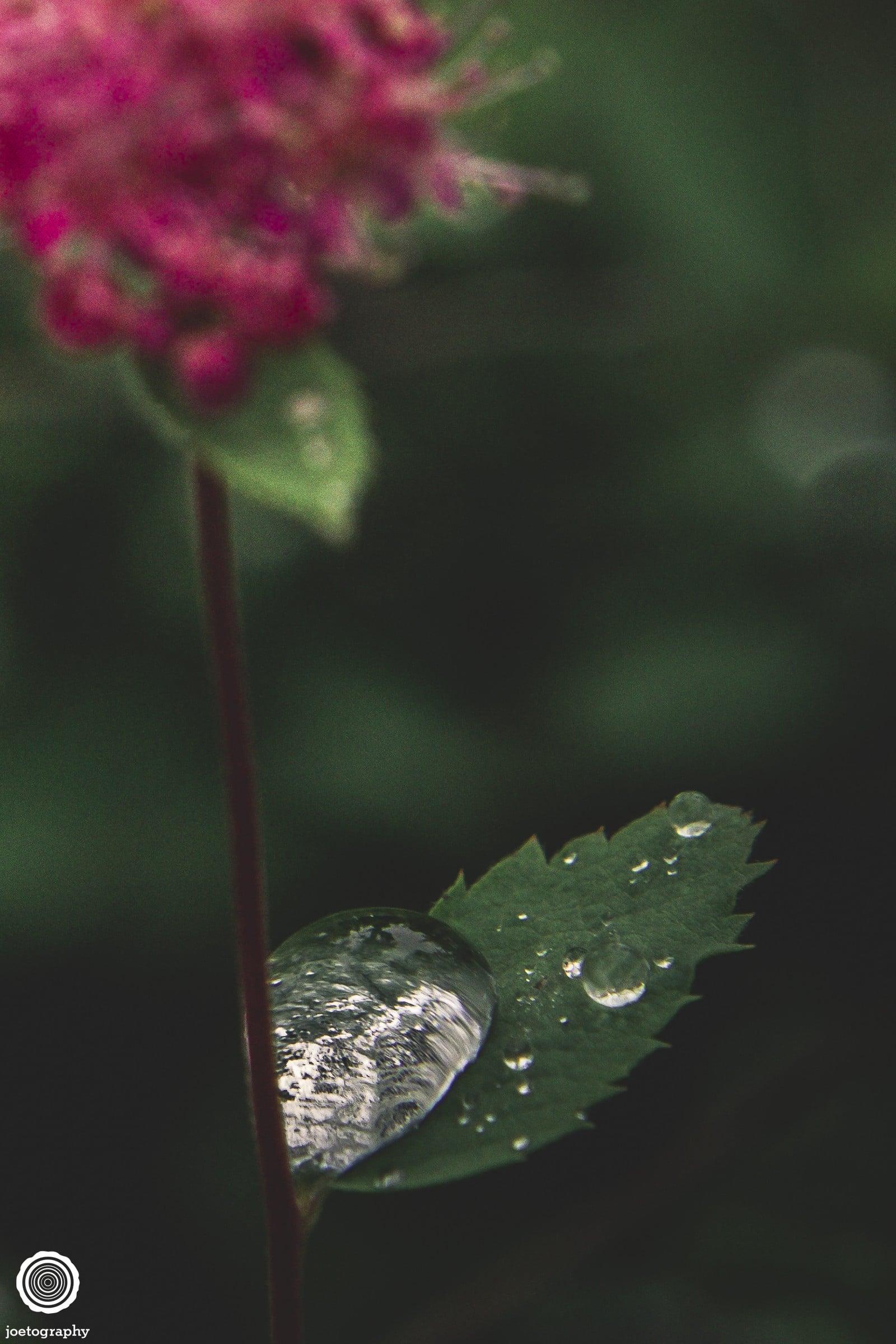 joetography-travel-photography-yosemite-2015-56