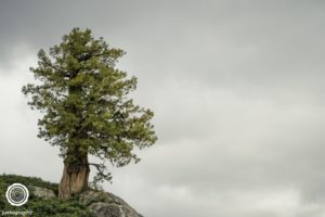 joetography-travel-photography-yosemite-2015-75