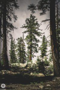 joetography-travel-photography-yosemite-2015-79