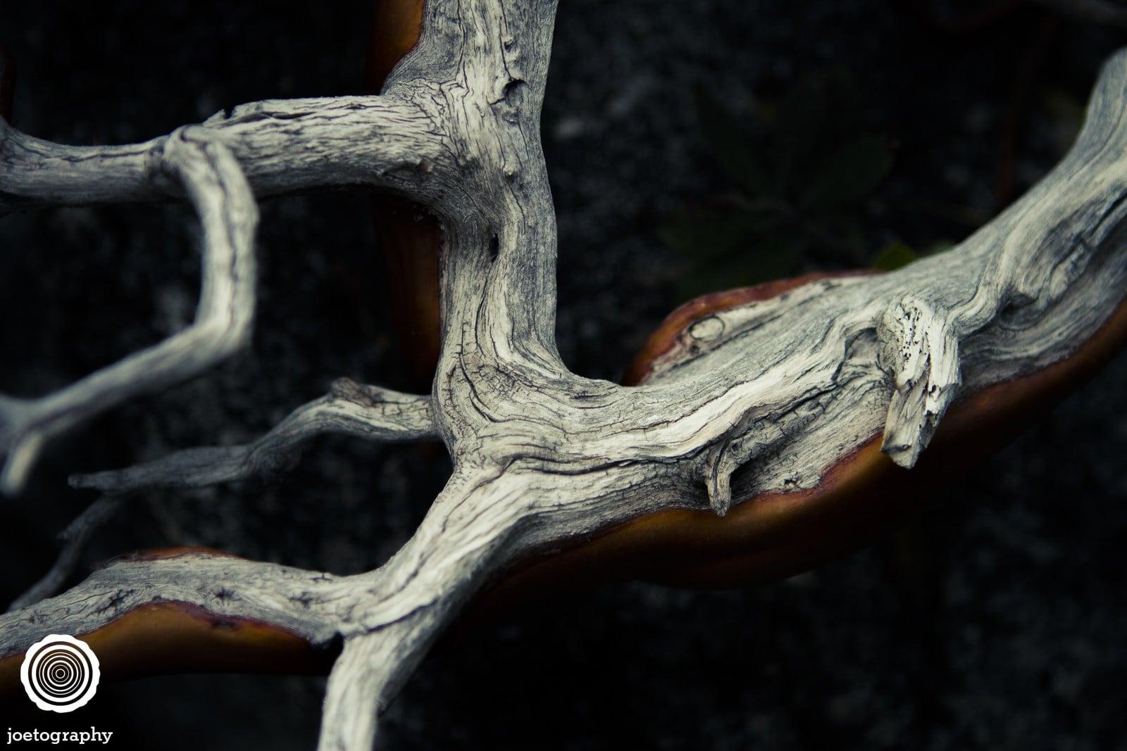 joetography-travel-photography-yosemite-2015-91