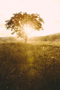 odorous-sunrise-landscape-photographer-indianapolis