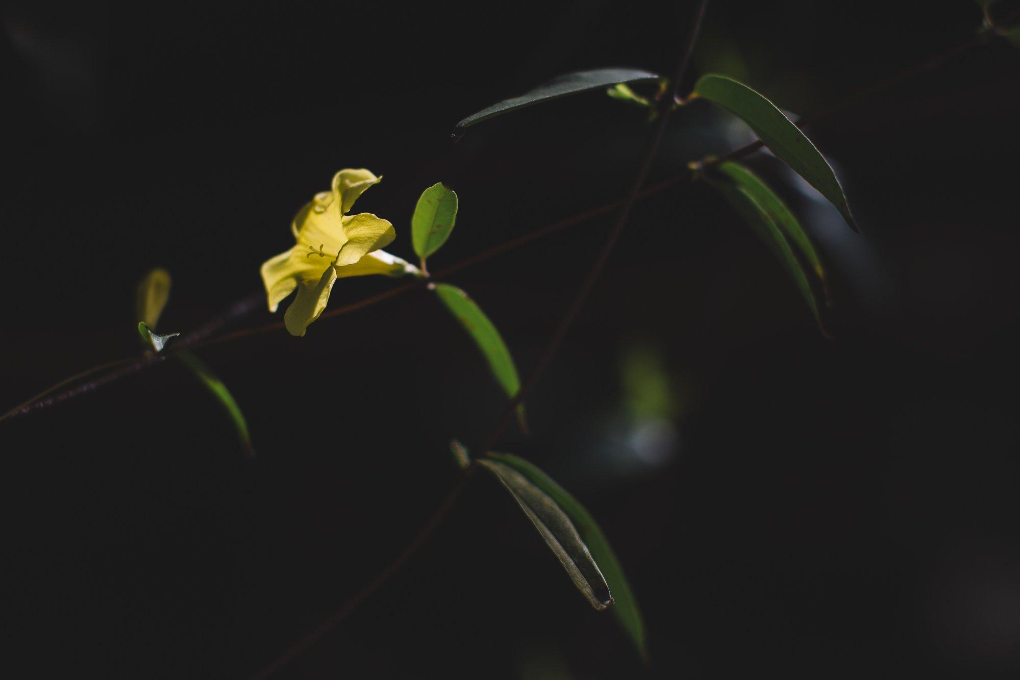 landscape-photography-indianapolis-nashville-2017-13