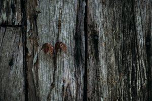 landscape-photography-indianapolis-nashville-2017-20