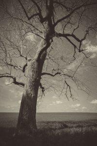 landscape-photography-indianapolis-nashville-2017-22