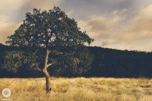 laity-lodge-san-antonio-texas-landscape-photographer-indianapolis-12