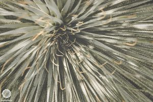 laity-lodge-san-antonio-texas-landscape-photographer-indianapolis-13