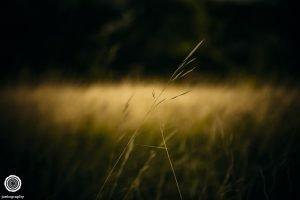 laity-lodge-san-antonio-texas-landscape-photographer-indianapolis-24