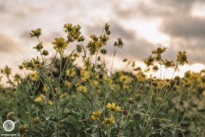 laity-lodge-san-antonio-texas-landscape-photographer-indianapolis-5