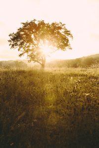 laity-lodge-san-antonio-texas-landscape-photographer-indianapolis-7