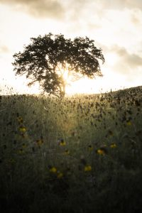 laity-lodge-san-antonio-texas-landscape-photographer-indianapolis-9