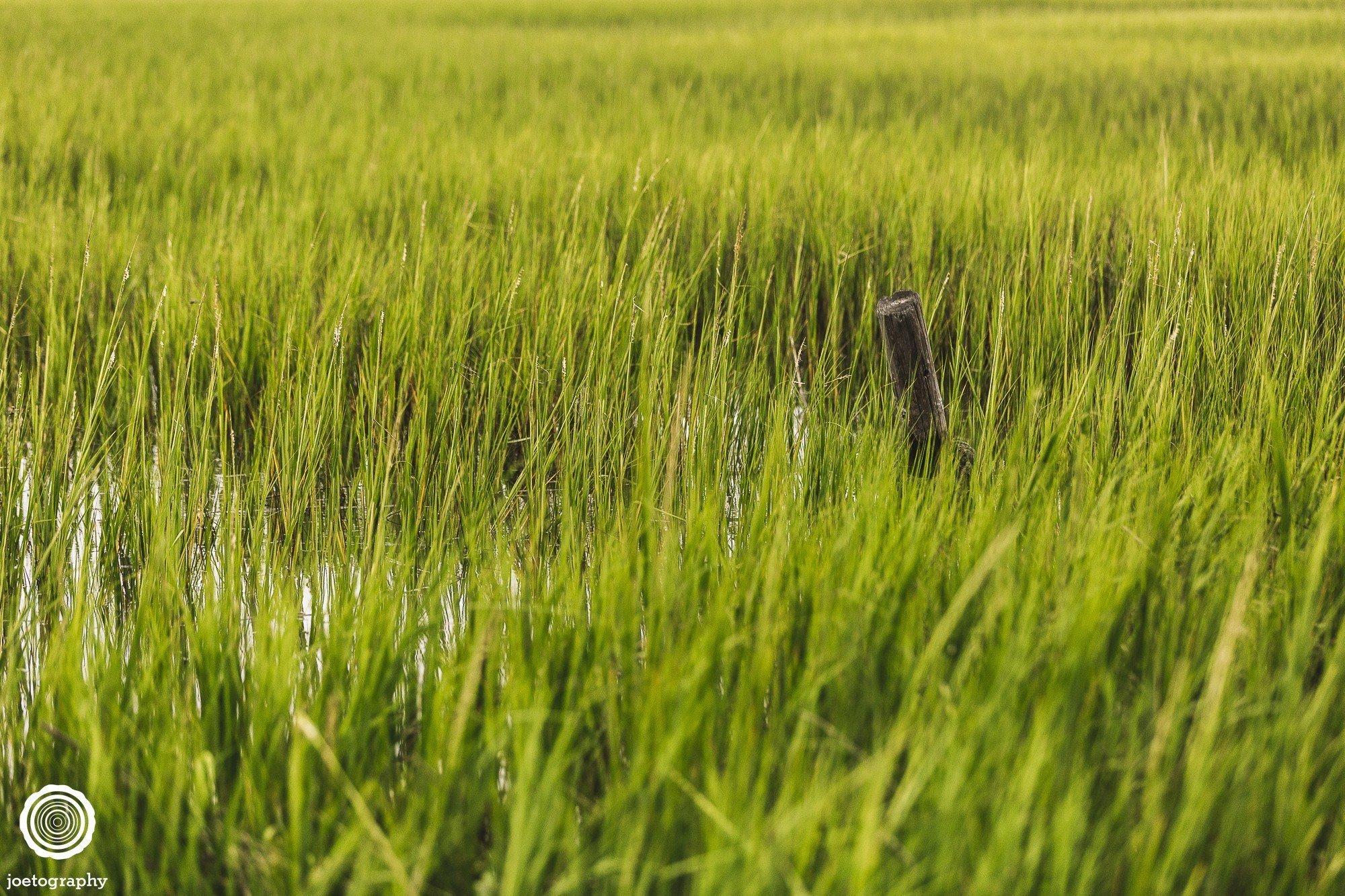 pawleys-island-south-carolina-landscape-photographer-indianapolis-16