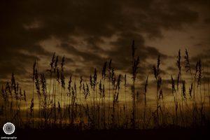 pawleys-island-south-carolina-landscape-photographer-indianapolis-20