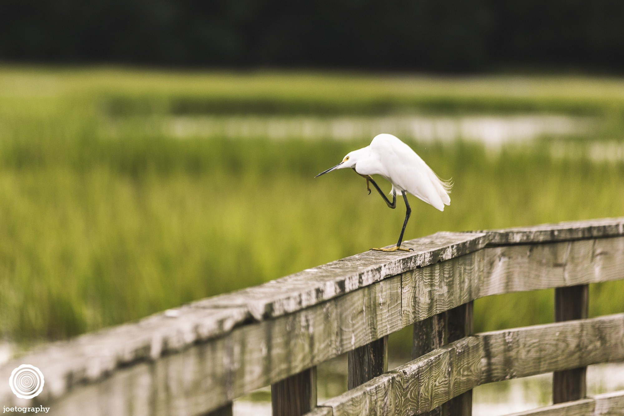pawleys-island-south-carolina-landscape-photographer-indianapolis-23