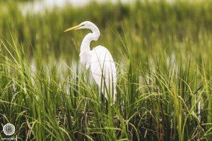 pawleys-island-south-carolina-landscape-photographer-indianapolis-25