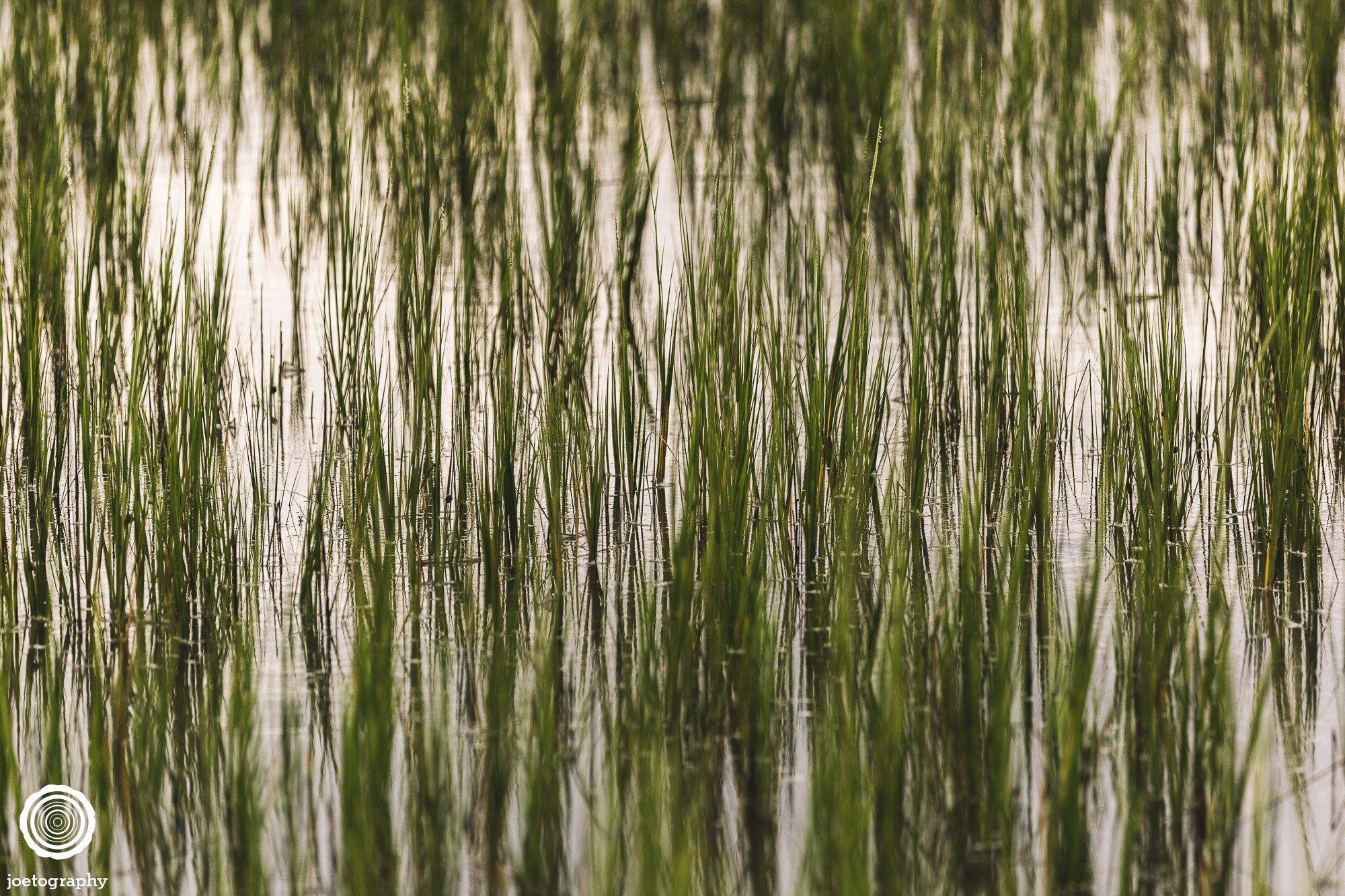 pawleys-island-south-carolina-landscape-photographer-indianapolis-26