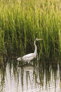 pawleys-island-south-carolina-landscape-photographer-indianapolis-27