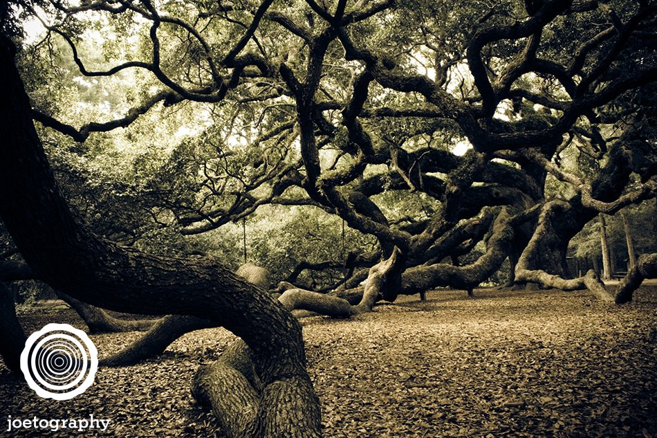 Angel Oak - Johns Island - South Carolina