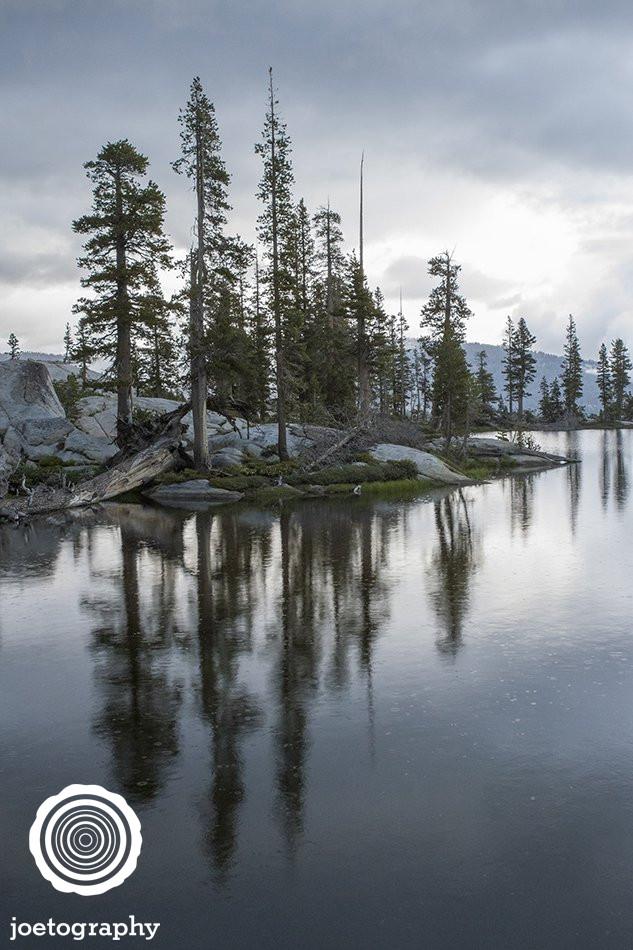 Reflective Roots - Yosemite National Park - California